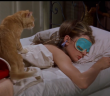 supercut of cats