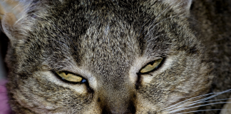 image of an angry internet cat